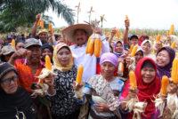 Gubernur Panen dan Makan Jagung Bersama Petani